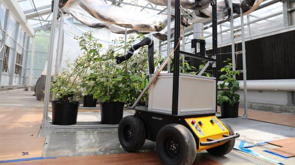 i-1-as-bee-populations-decline-this-robot-bee-could-help-pollinate-crops.jpg